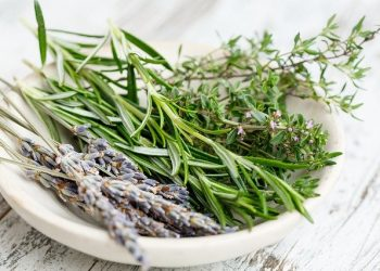 Fresh herbs for Herbs de Provence Recipe for French and Mediterranean Cooking